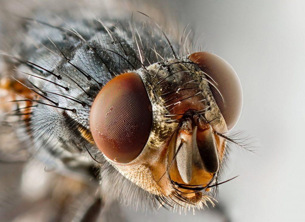 El control de mosca