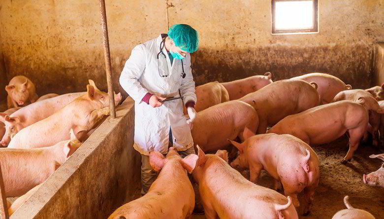 Nutrición vs. Reproducción en Porcino